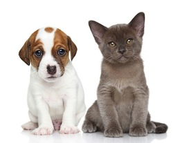 Puppy and kitten on white