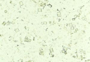 Cristallurie