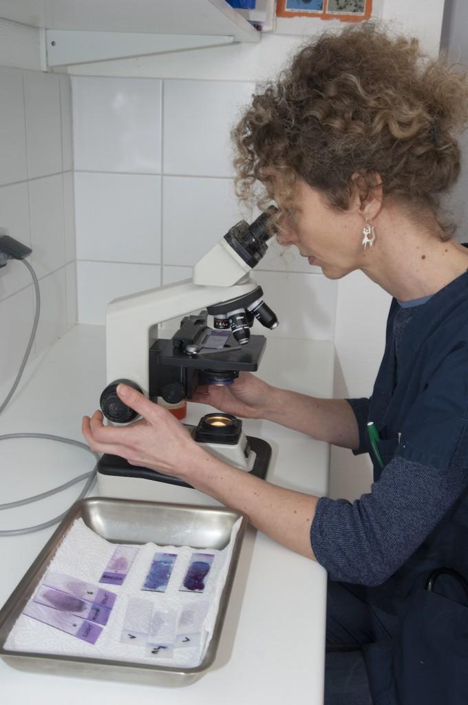Dermatologie Vétérinaire Chien Chat Clinique Rostrenen