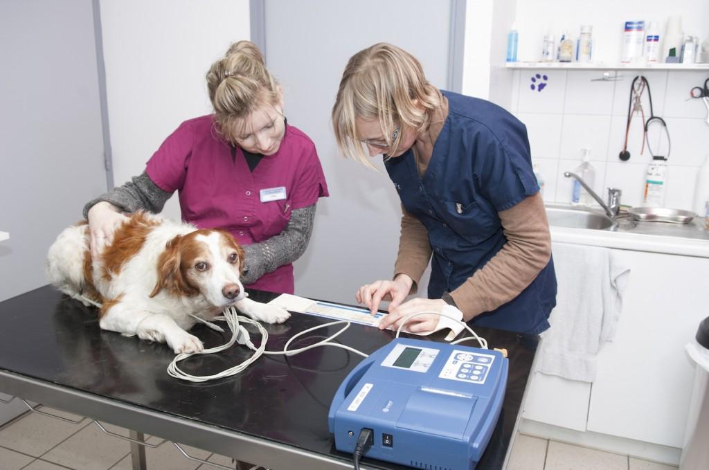 Cardiologie vétérinaire Rostrenen