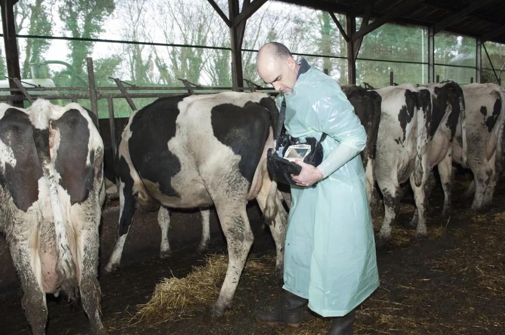 Reproduction Conseil Audit Suivi Vétérinaire Centre Bretagne