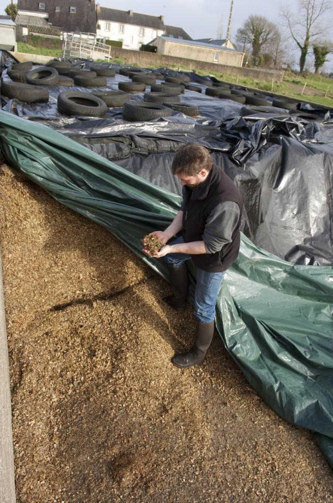 Conseil Audit Suivi Nutrition Vétérinaire en élevage bovin laitier Bretagne