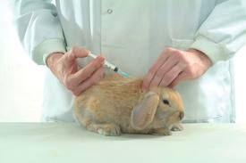 vaccination_lapin_veterinaire